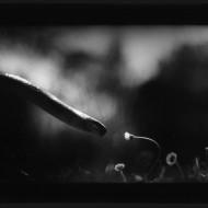 I movimenti degli animali secondo Giacomo Brunelli