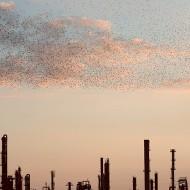 Refinery flock di Massimo Cristaldi